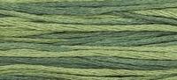 Week Dye Works Collards 1277
