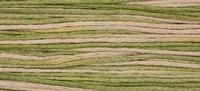 Week Dye Works Foxglove 1141